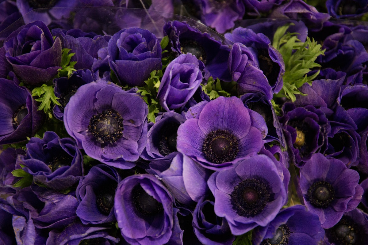 New Covent Garden Flower Market April 2018 In Season Report Rona Wheeldon Flowerona Anemone Galil Blue At Zest Flowers