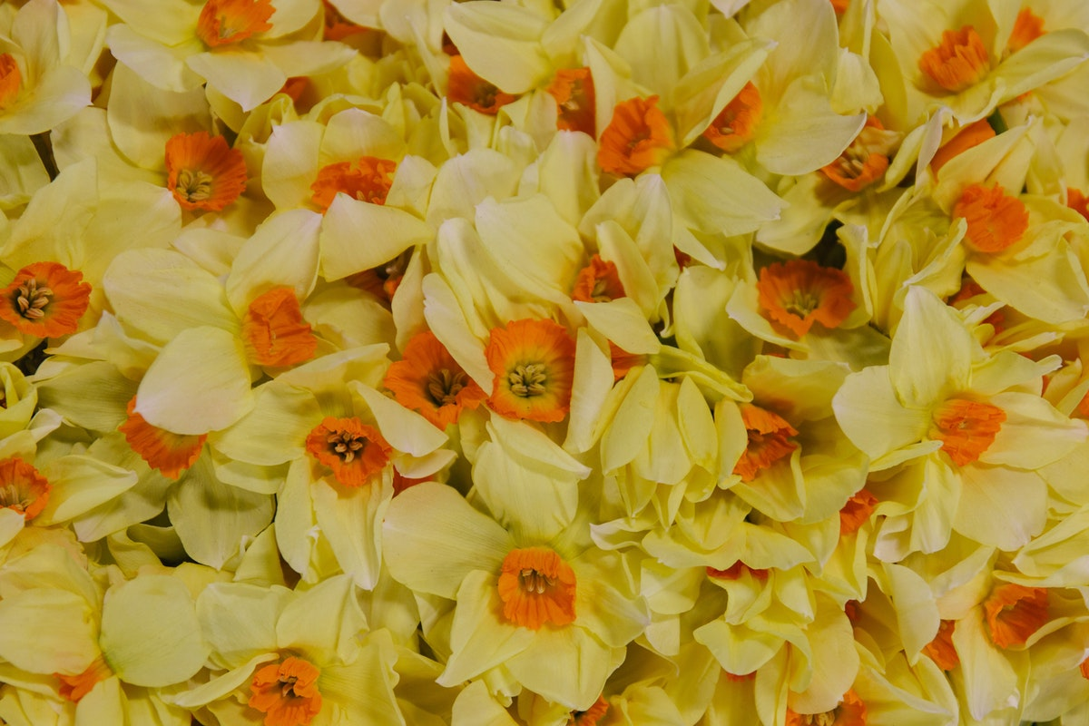 New Covent Garden Flower Market April 2018 In Season Report Rona Wheeldon Flowerona British Narcissus Buxton At Pratley Hero Image