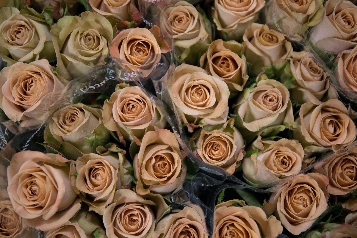 New Covent Garden Flower Market April 2018 In Season Report Rona Wheeldon Flowerona Cappuccino Roses At Dennis Edwards Flowers