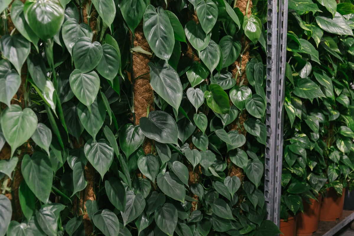 New Covent Garden Flower Market April 2018 In Season Report Rona Wheeldon Flowerona Philodendron Plants At Arnott Mason