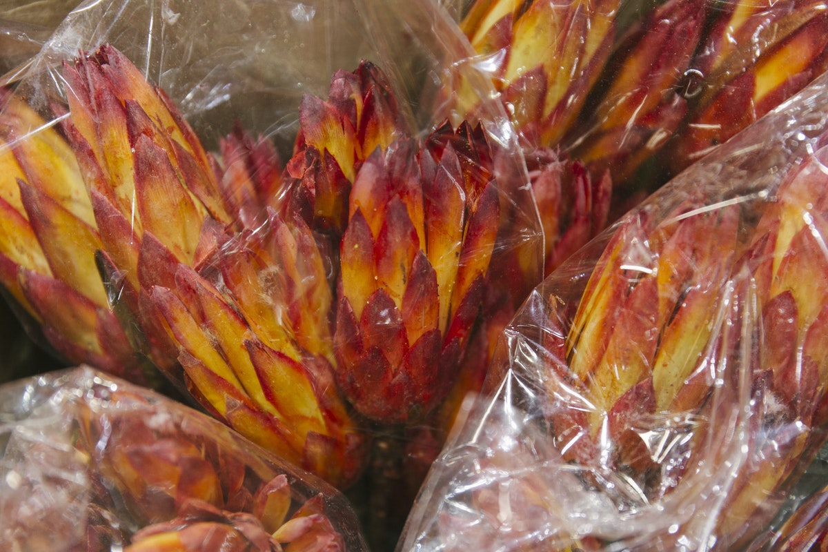 New Covent Garden Flower Market April 2019 A Florists Guide To Dried Flowers And Grasses Rona Wheeldon Flowerona Dried Protea Pendula At Porters Foliage