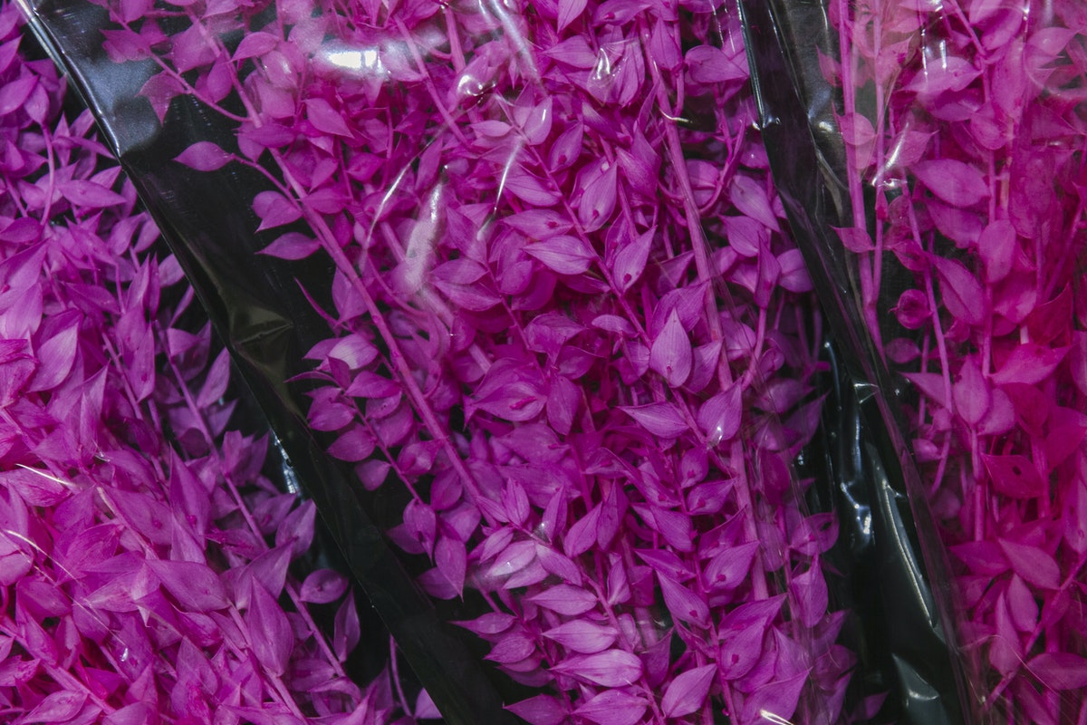 New Covent Garden Flower Market April 2019 A Florists Guide To Dried Flowers And Grasses Rona Wheeldon Flowerona Preserved Cerise Pink Ruscus At Porters Foliage