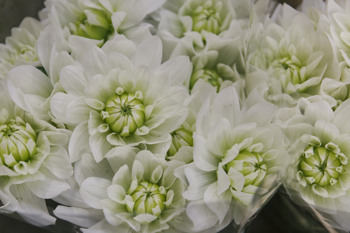 New Covent Garden Flower Market April 2019 In Season Report Rona Wheeldon Flowerona Wheeldon Flowerona Dahlia Karma Maarten Zwaan At Zest Flowers