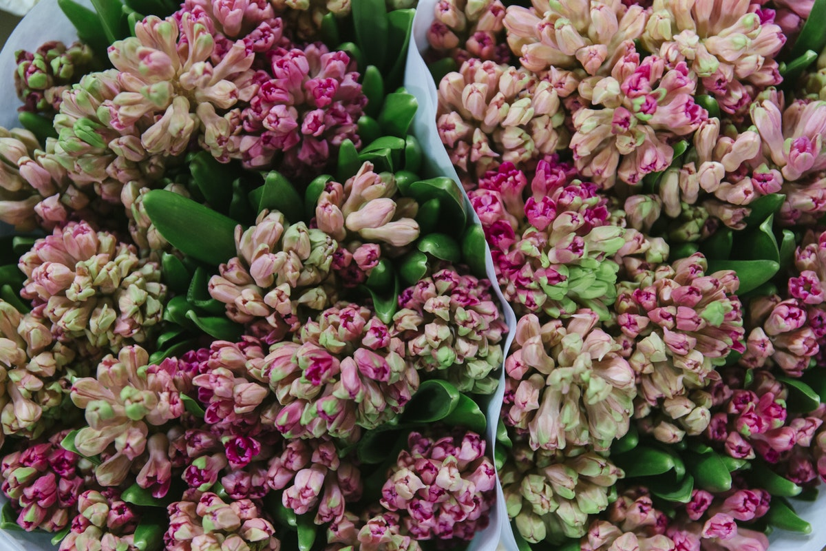 New Covent Garden Flower Market April 2019 In Season Report Rona Wheeldon Flowerona Wheeldon Flowerona Hyacinthus Orientalis Jan Bos At J H Hart Flowers