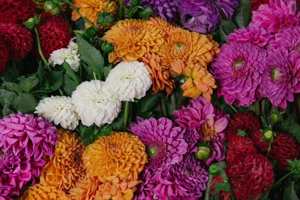 New Covent Garden Flower Market August 2018 In Season Report Rona Wheeldon Flowerona British Mixed Dahlias At Pratley