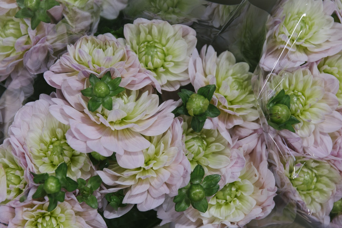 New Covent Garden Flower Market August 2019 A Florists Guide To Dahlias Rona Wheeldon Flowerona Dahlia Dianas Memory At Zest Flowers 1