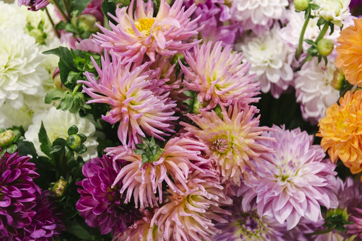 New Covent Garden Flower Market August 2019 A Florists Guide To Dahlias Rona Wheeldon Flowerona Mixed British Dahlias At Zest Flowers Hero Image