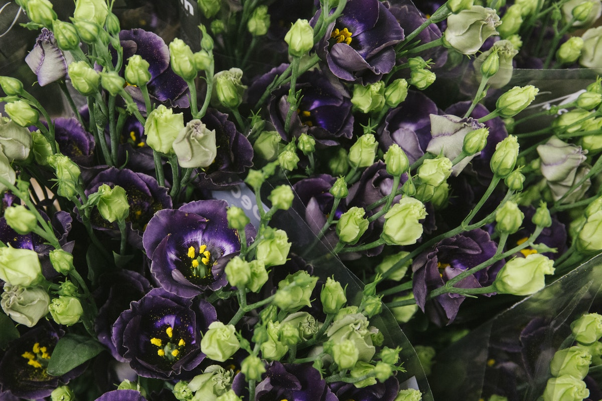 New Covent Garden Flower Market August 2019 In Season Report Rona Wheeldon Flowerona Lisianthus Bohemian Black Violet At Dennis Edwards Flowers