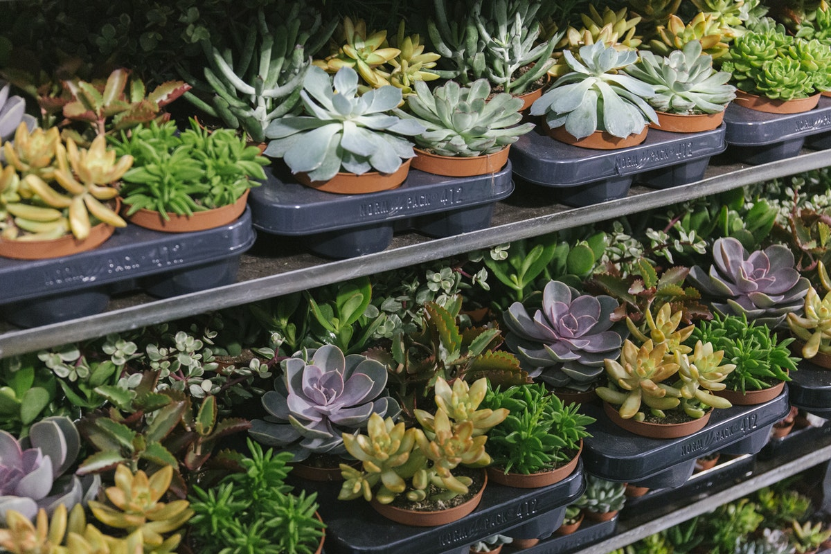 New Covent Garden Flower Market August 2019 In Season Report Rona Wheeldon Flowerona Trays Of Mixed Succulents At Arnott Mason