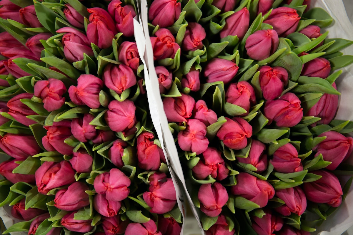 New Covent Garden Flower Market February 2018 A Florists Guide To Tulips Rona Wheeldon Flowerona Cerise Pink Tulips Frontline At Dg Wholesale Flowers