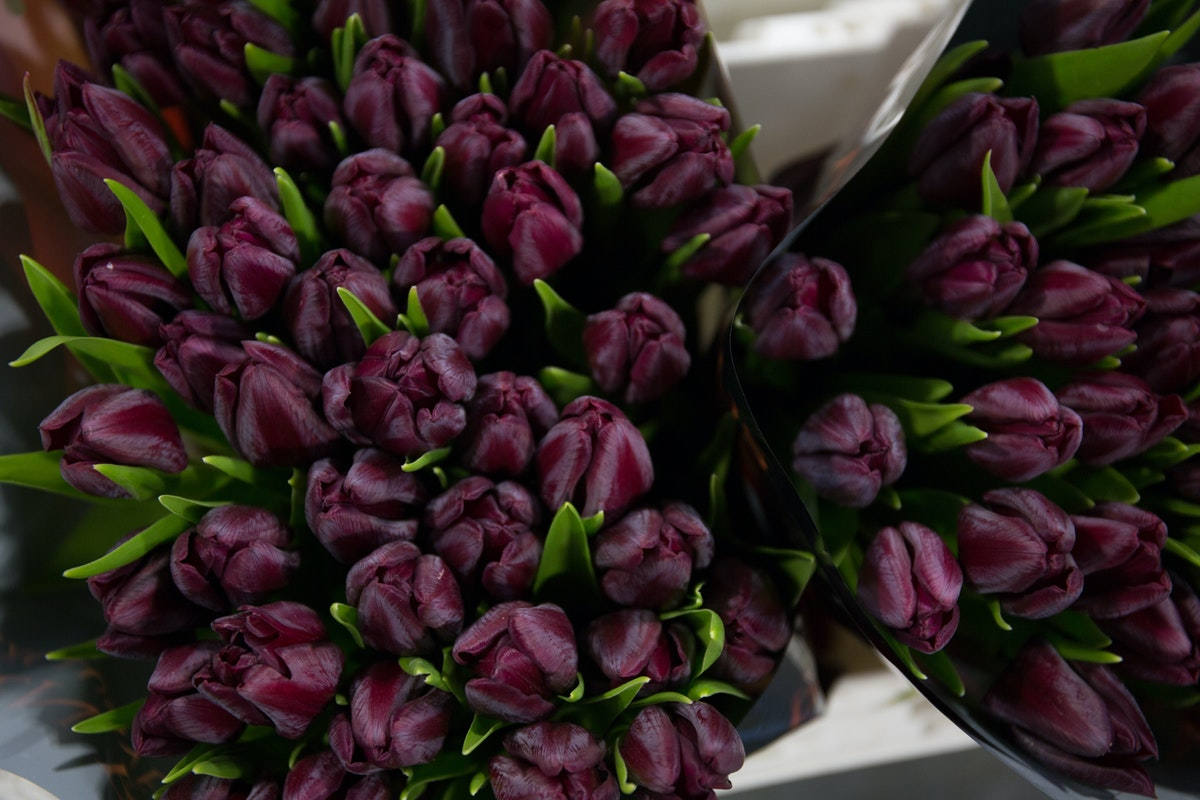 New Covent Garden Flower Market February 2018 A Florists Guide To Tulips Rona Wheeldon Flowerona Deep Purple Ronaldo Unique At Dg Wholesale Flowers