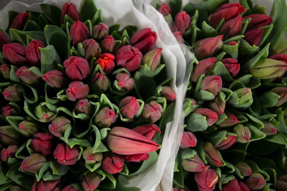 New Covent Garden Flower Market February 2018 A Florists Guide To Tulips Rona Wheeldon Flowerona Deep Red Tulip Strong Love At J H Hart Flowers
