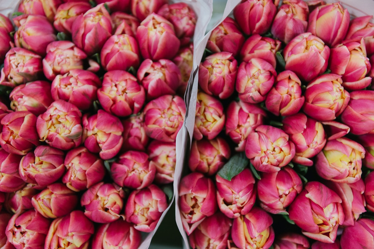 New Covent Garden Flower Market February 2018 A Florists Guide To Tulips Rona Wheeldon Flowerona Double Pink Tulip Columbus Dg Wholesale Flowers