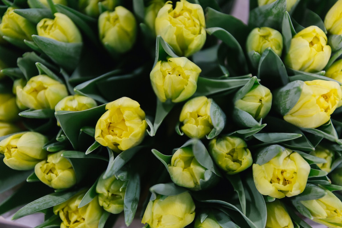New Covent Garden Flower Market February 2018 A Florists Guide To Tulips Rona Wheeldon Flowerona Double Yellow Tulip Marie Jo At Bloomfield