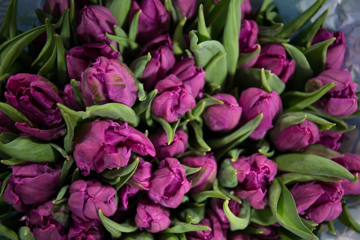 New Covent Garden Flower Market February 2018 A Florists Guide To Tulips Rona Wheeldon Flowerona Purple Parrot Tulip Parrot Prince At Dg Wholesale Flowers