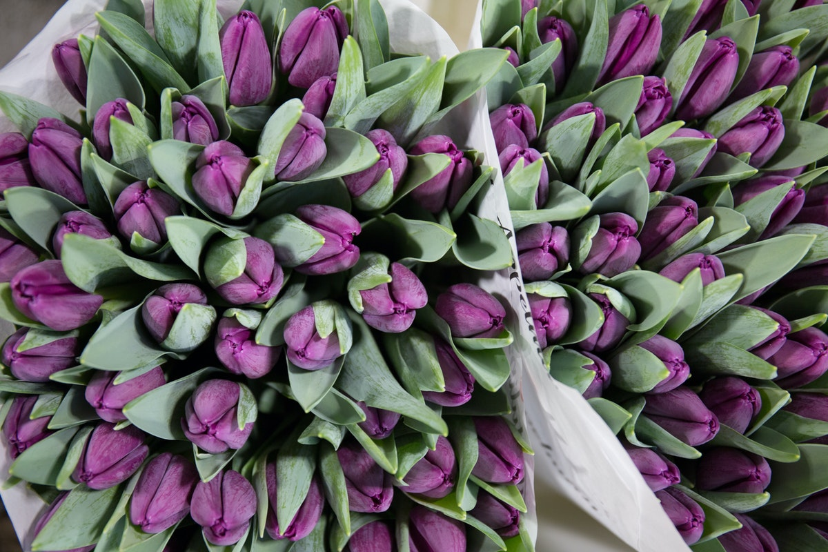 New Covent Garden Flower Market February 2018 A Florists Guide To Tulips Rona Wheeldon Flowerona Purple Tulip Bullit At Dg Wholesale Flowers