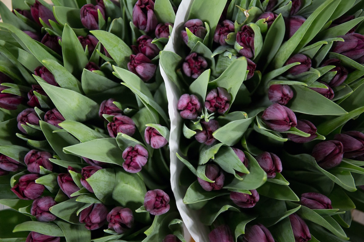 New Covent Garden Flower Market February 2018 A Florists Guide To Tulips Rona Wheeldon Flowerona Purple Tulip Ronaldo At Bloomfield