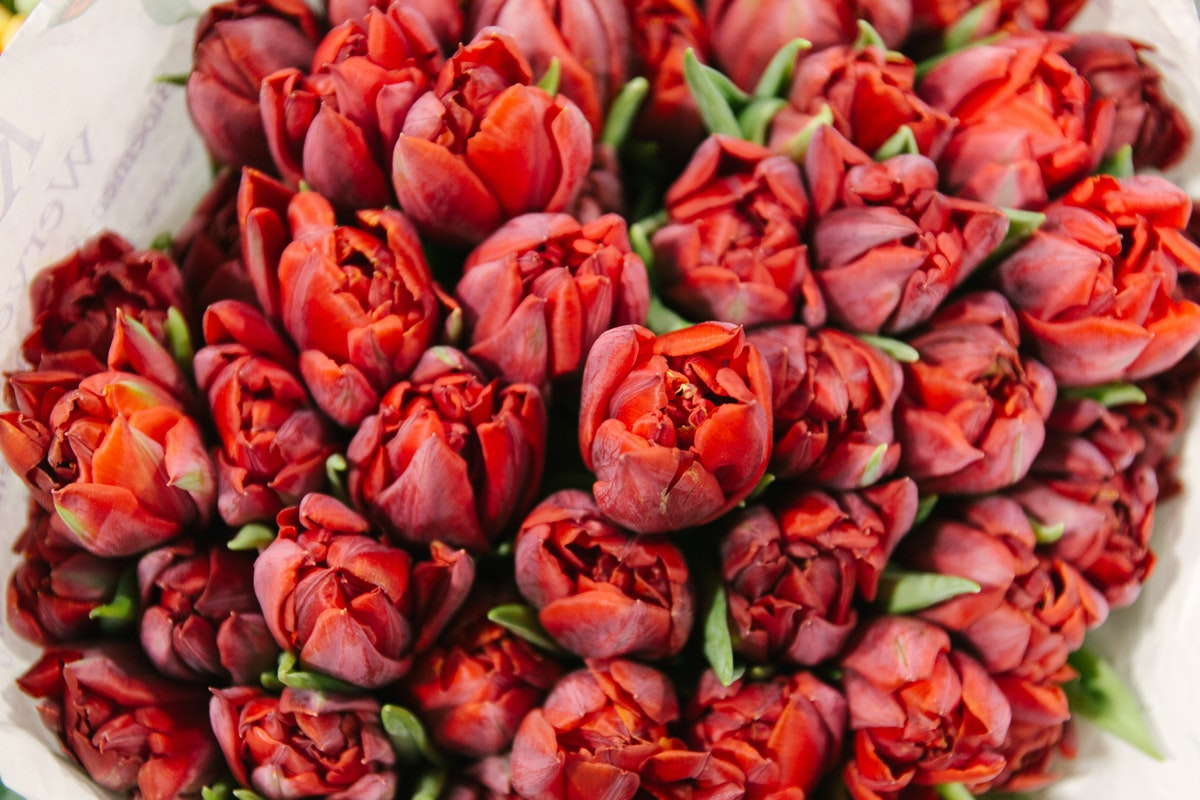 New Covent Garden Flower Market February 2018 A Florists Guide To Tulips Rona Wheeldon Flowerona Red Double Tulip Red Princess At Dg Wholesale Flowers