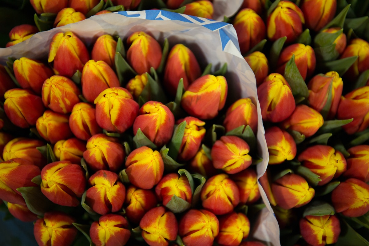 New Covent Garden Flower Market February 2018 A Florists Guide To Tulips Rona Wheeldon Flowerona Red Yellow Tulip Denmark At Deanos Flowers