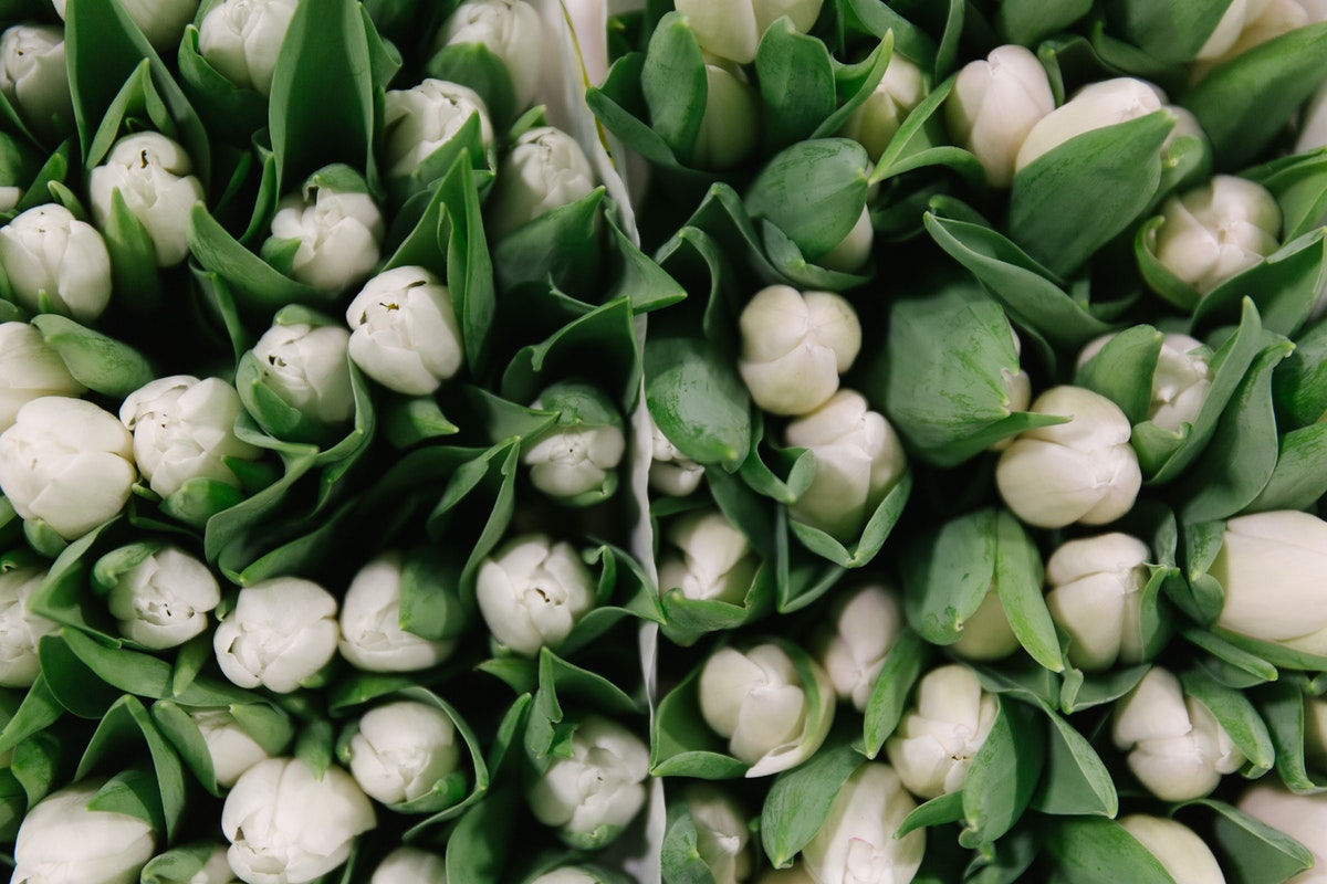 New Covent Garden Flower Market February 2018 A Florists Guide To Tulips Rona Wheeldon Flowerona Single White Tulip Coquette At Zest Flowers