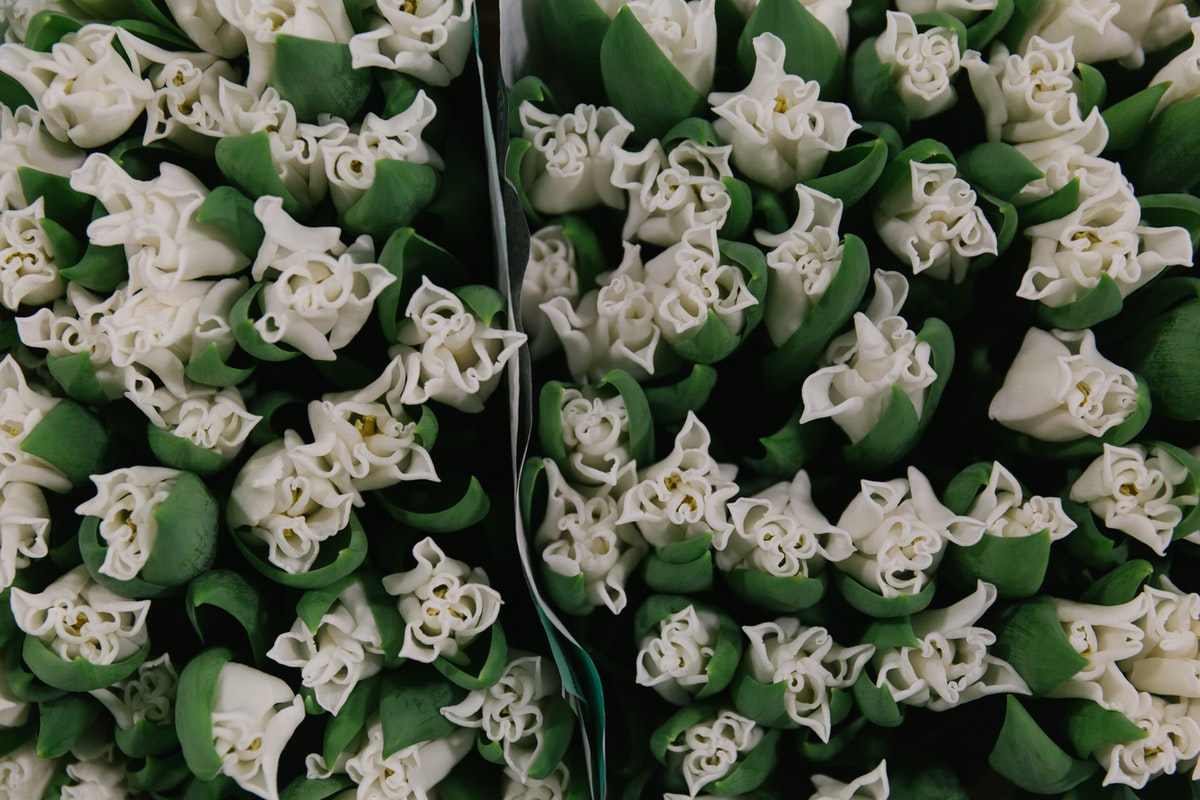 New Covent Garden Flower Market February 2018 A Florists Guide To Tulips Rona Wheeldon Flowerona White Tulip White Liberstar At Bloomfield