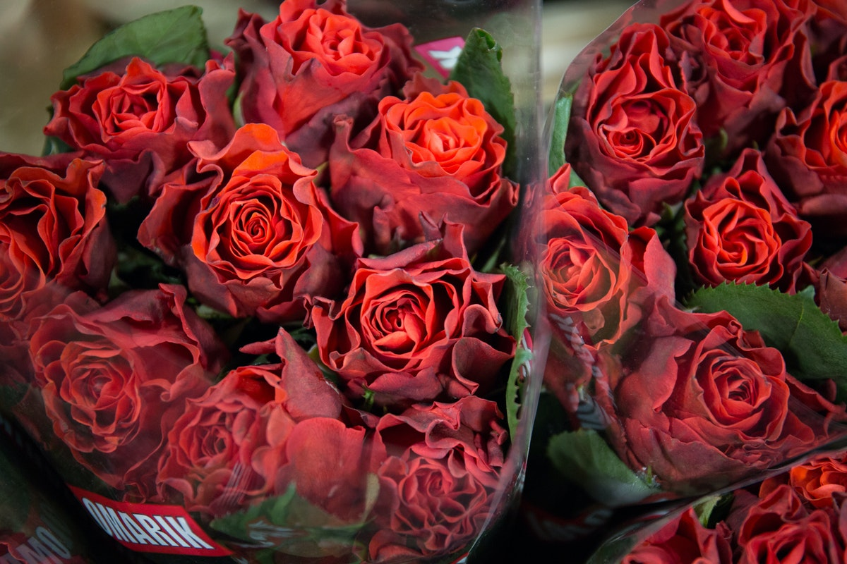 New Covent Garden Flower Market February 2018 In Season Report Rona Wheeldon Flowerona El Toro Rose At Bloomfield