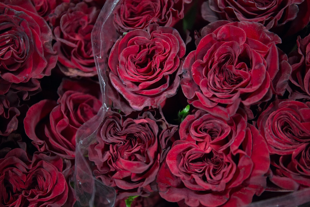 New Covent Garden Flower Market February 2018 In Season Report Rona Wheeldon Flowerona Hearts Rose At Bloomfield