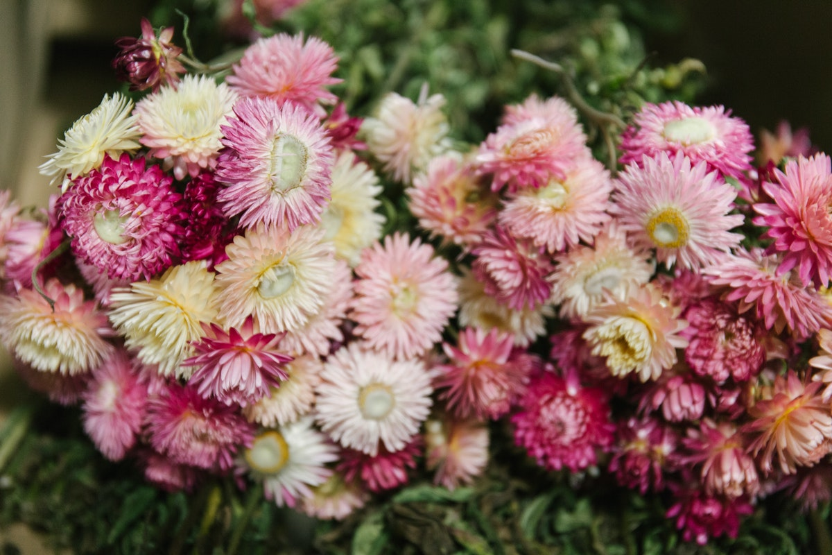 New Covent Garden Flower Market February 2018 In Season Report Rona Wheeldon Flowerona Pink Helichrysum At Porters Foliage