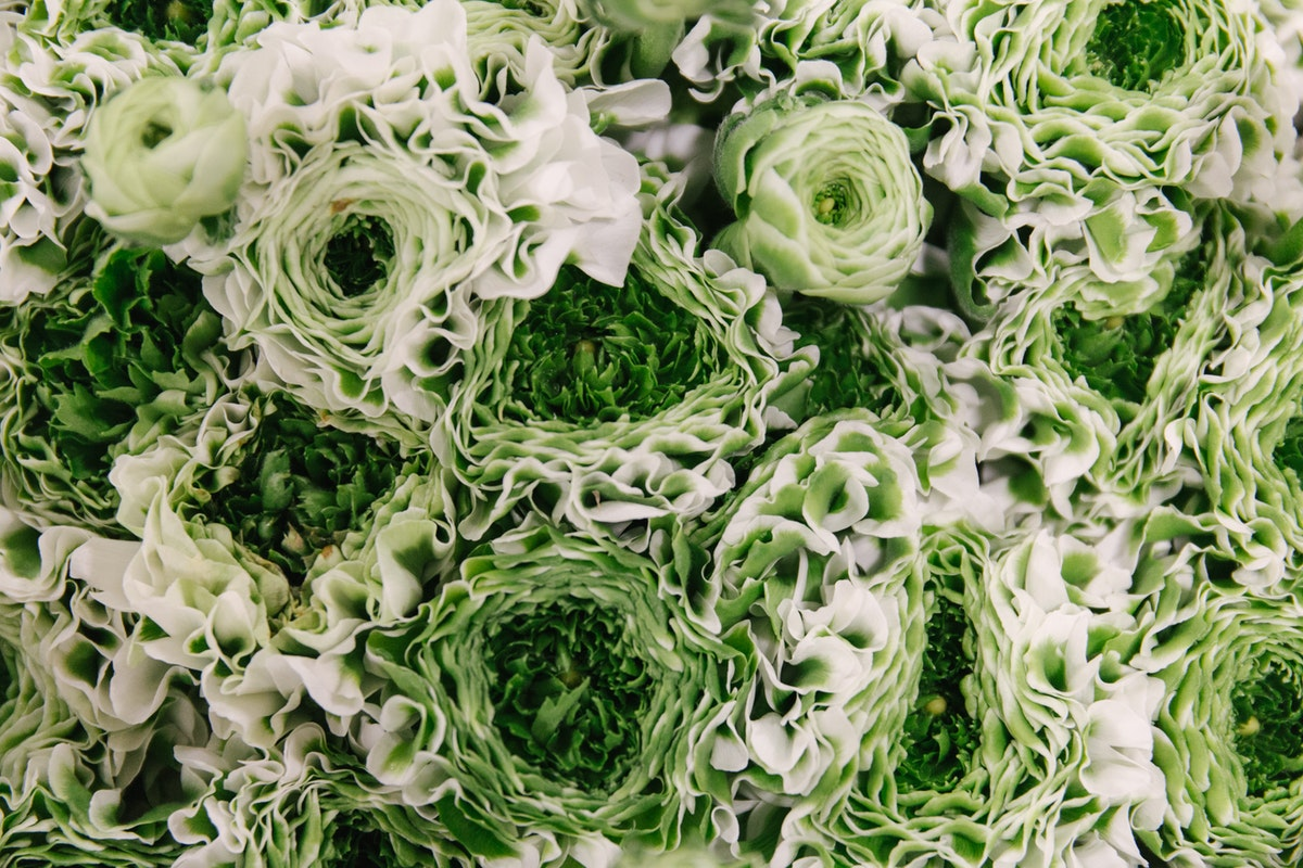 New Covent Garden Flower Market February 2018 In Season Report Rona Wheeldon Flowerona Ranunculus Pon Pon Igloo At Dennis Edwards Flowers