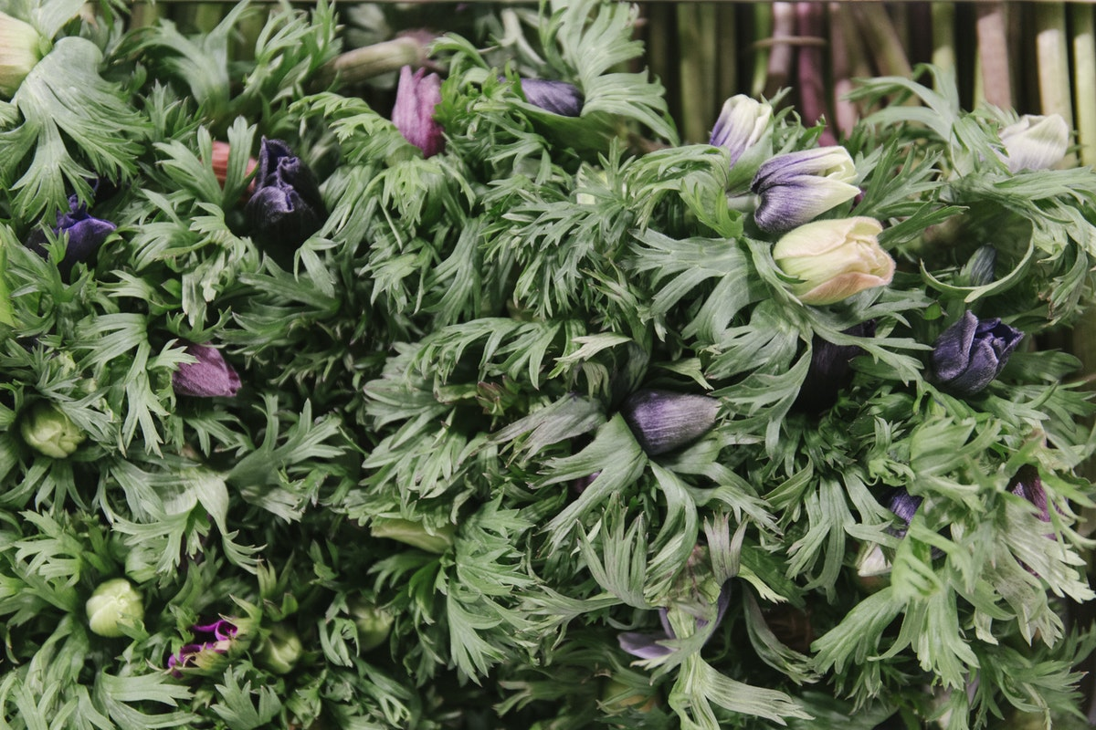 New Covent Garden Flower Market February 2019 A Florists Guide To Anemones Rona Wheeldon Flowerona British Anemones At Pratley 1