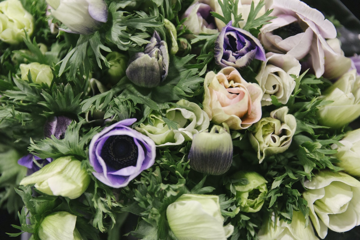 New Covent Garden Flower Market February 2019 A Florists Guide To Anemones Rona Wheeldon Flowerona Mistral Plus Azzurro Anemones At D G Wholesale Flowers