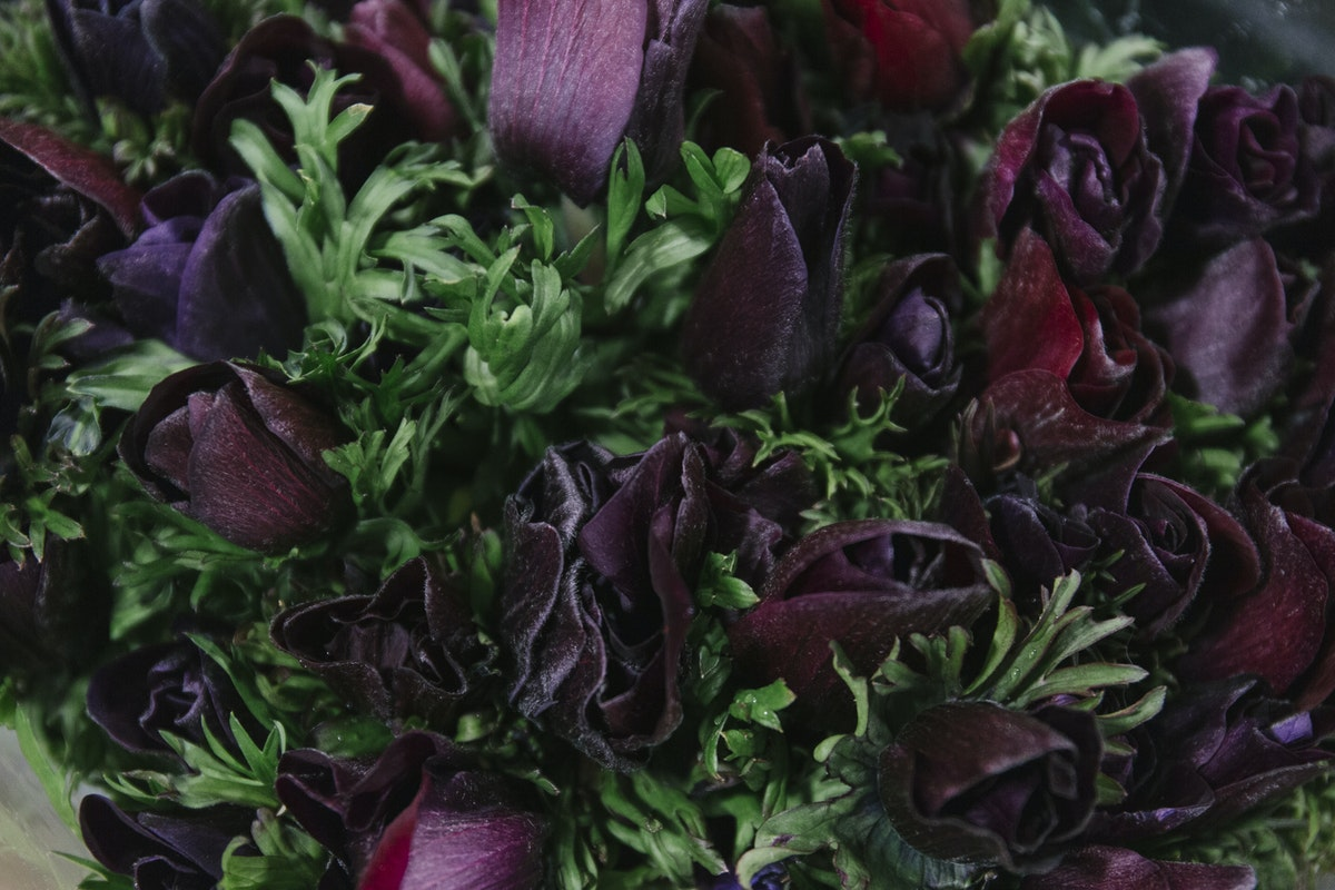 New Covent Garden Flower Market February 2019 A Florists Guide To Anemones Rona Wheeldon Flowerona Mistral Plus Black Anemones At Dg Wholesale Flowers