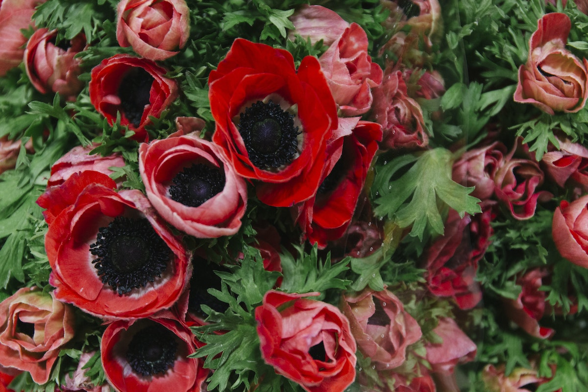 New Covent Garden Flower Market February 2019 A Florists Guide To Anemones Rona Wheeldon Flowerona Mistral Plus Red Anemones At Bloomfield
