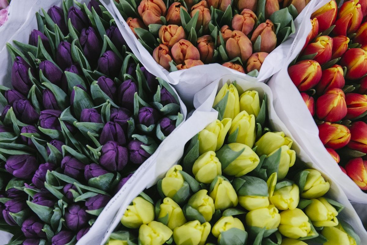 New Covent Garden Flower Market February 2019 In Season Report Rona Wheeldon Flowerona British Tulips At Pratley