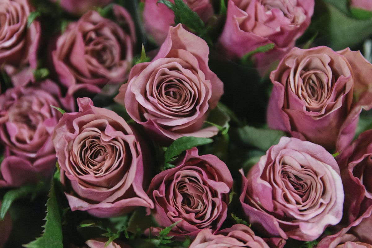New Covent Garden Flower Market February 2019 In Season Report Rona Wheeldon Flowerona Magic Silver Rose At Bloomfield
