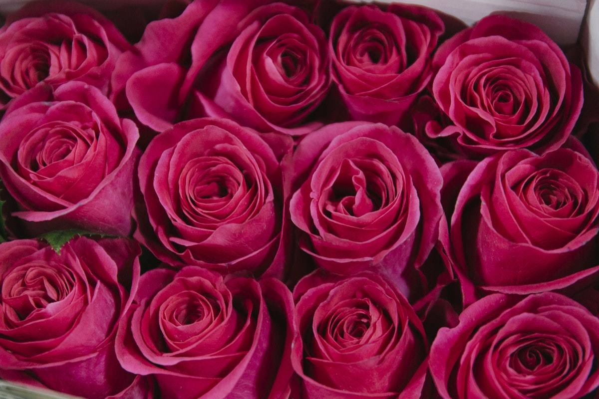New Covent Garden Flower Market February 2019 In Season Report Rona Wheeldon Flowerona Pink Floyd Rose At Bloomfield