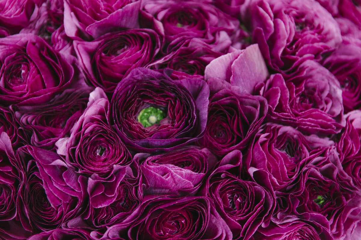 New Covent Garden Flower Market February 2019 In Season Report Rona Wheeldon Flowerona Ranunculus Cloni Sherry At Dennis Edwards Flowers
