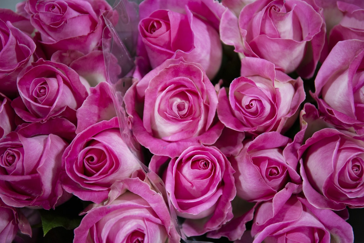 New Covent Garden Flower Market February 2020 A Florists Guide To The Language Of Flowers Rona Wheeldon Flowerona Avalanche Candy Roses At Bloomfield