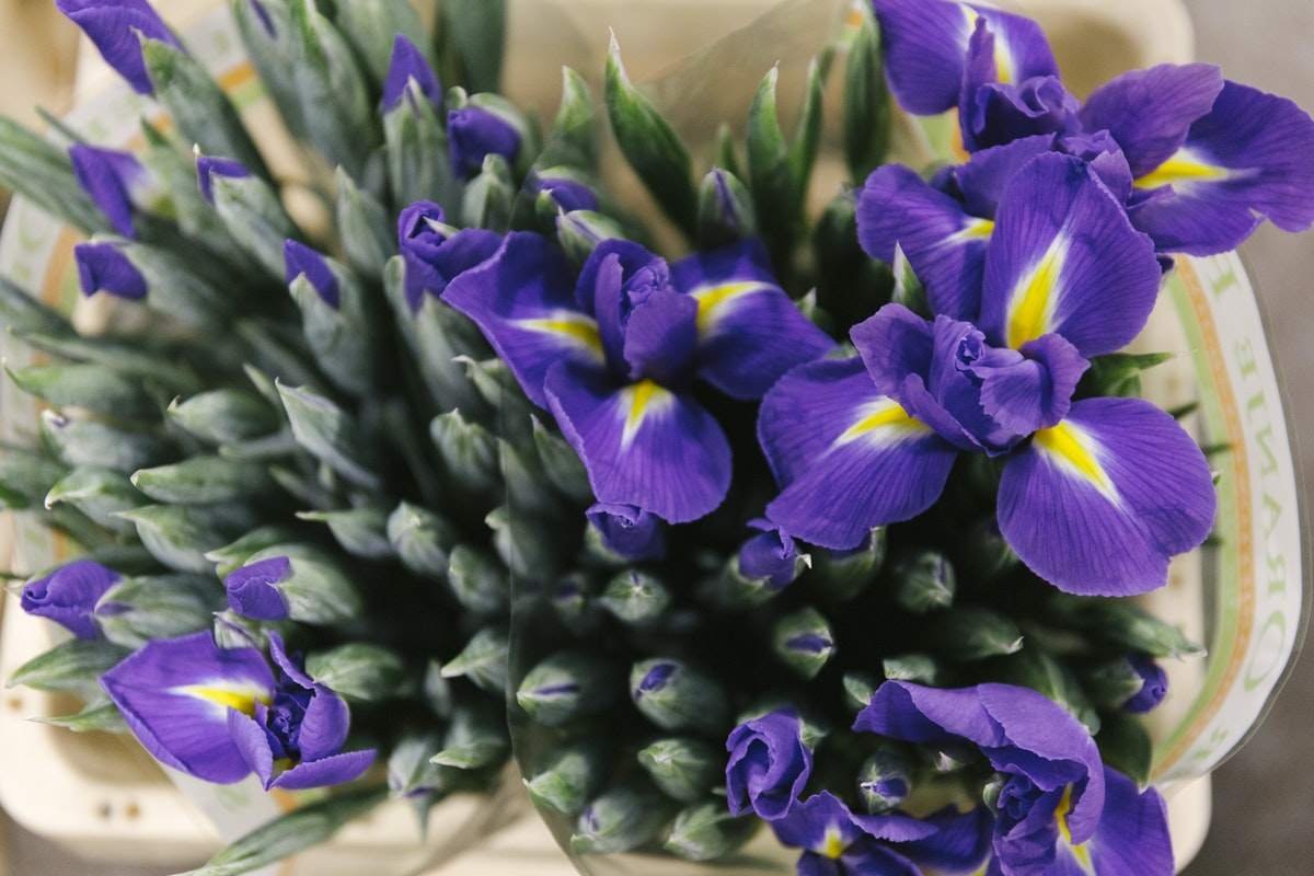 New Covent Garden Flower Market February 2020 A Florists Guide To The Language Of Flowers Rona Wheeldon Flowerona Blue Magic Iris At Bloomfield