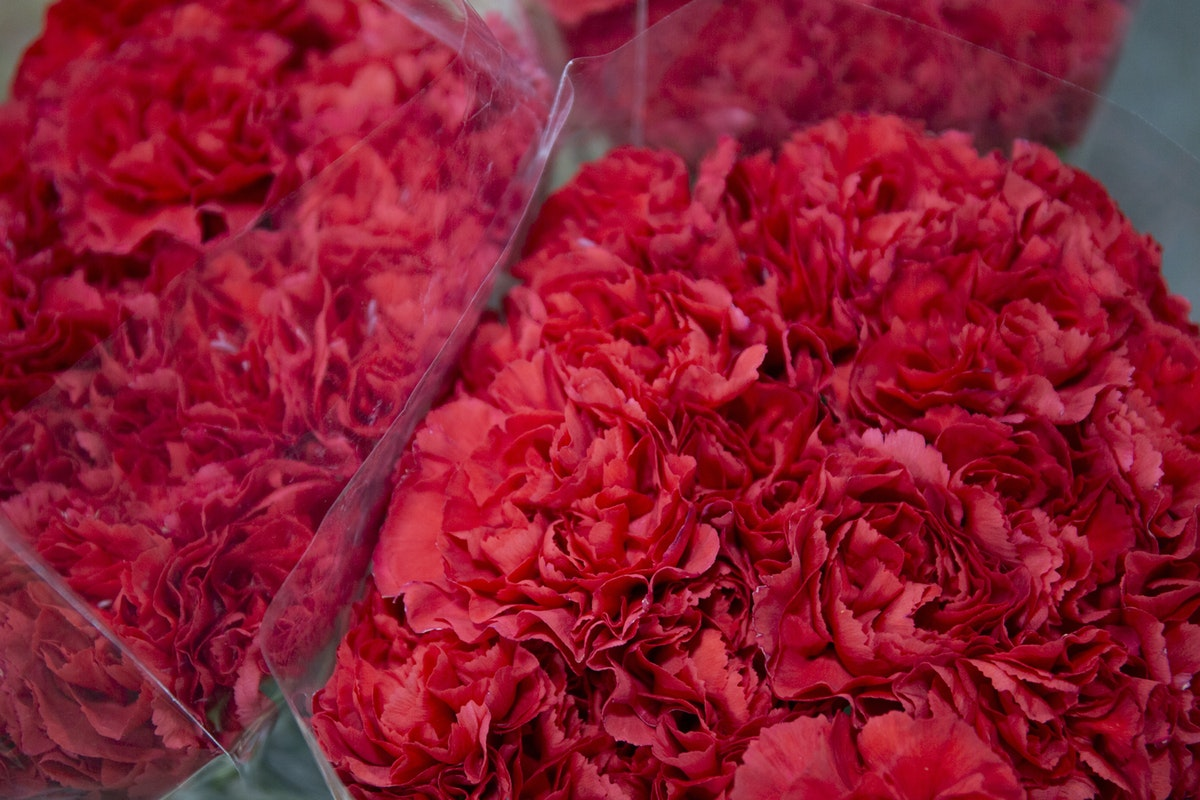 New Covent Garden Flower Market February 2020 A Florists Guide To The Language Of Flowers Rona Wheeldon Flowerona Grand Slam Carnations At The Floral Garden Group