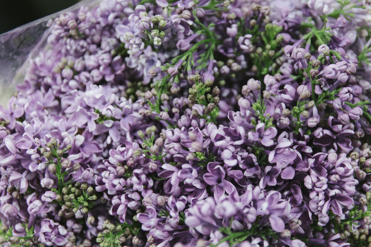 New Covent Garden Flower Market February 2020 A Florists Guide To The Language Of Flowers Rona Wheeldon Flowerona Lilac At Dennis Edwards Flowers