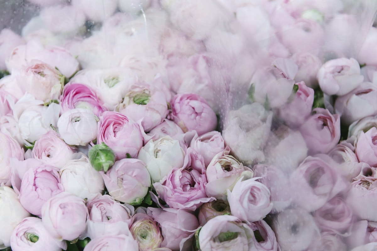 New Covent Garden Flower Market February 2020 A Florists Guide To The Language Of Flowers Rona Wheeldon Flowerona Pale Pink Ranunculus At Dg Wholesale Flowers
