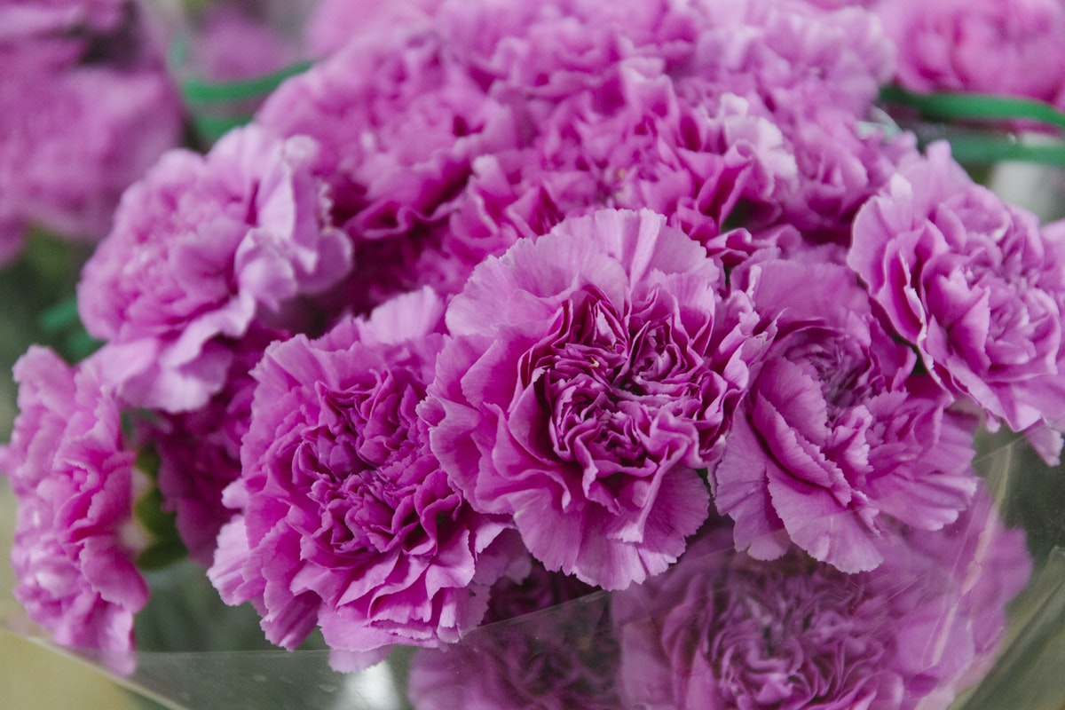 New Covent Garden Flower Market February 2020 A Florists Guide To The Language Of Flowers Rona Wheeldon Flowerona Pink Carnations At Dennis Edwards Flowers