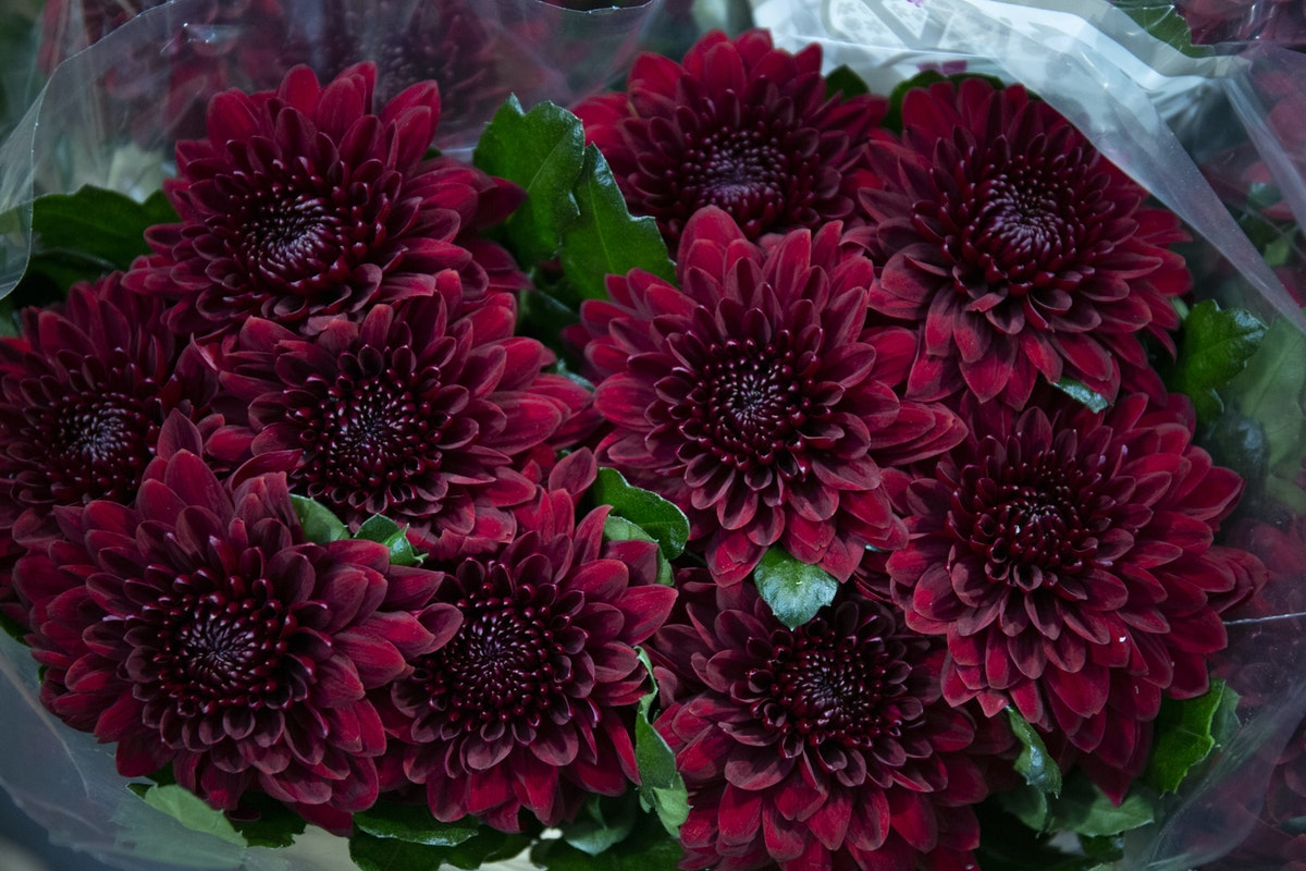 New Covent Garden Flower Market February 2020 A Florists Guide To The Language Of Flowers Rona Wheeldon Flowerona Pip Red Chrysanthemums At Dg Wholesale Flowers