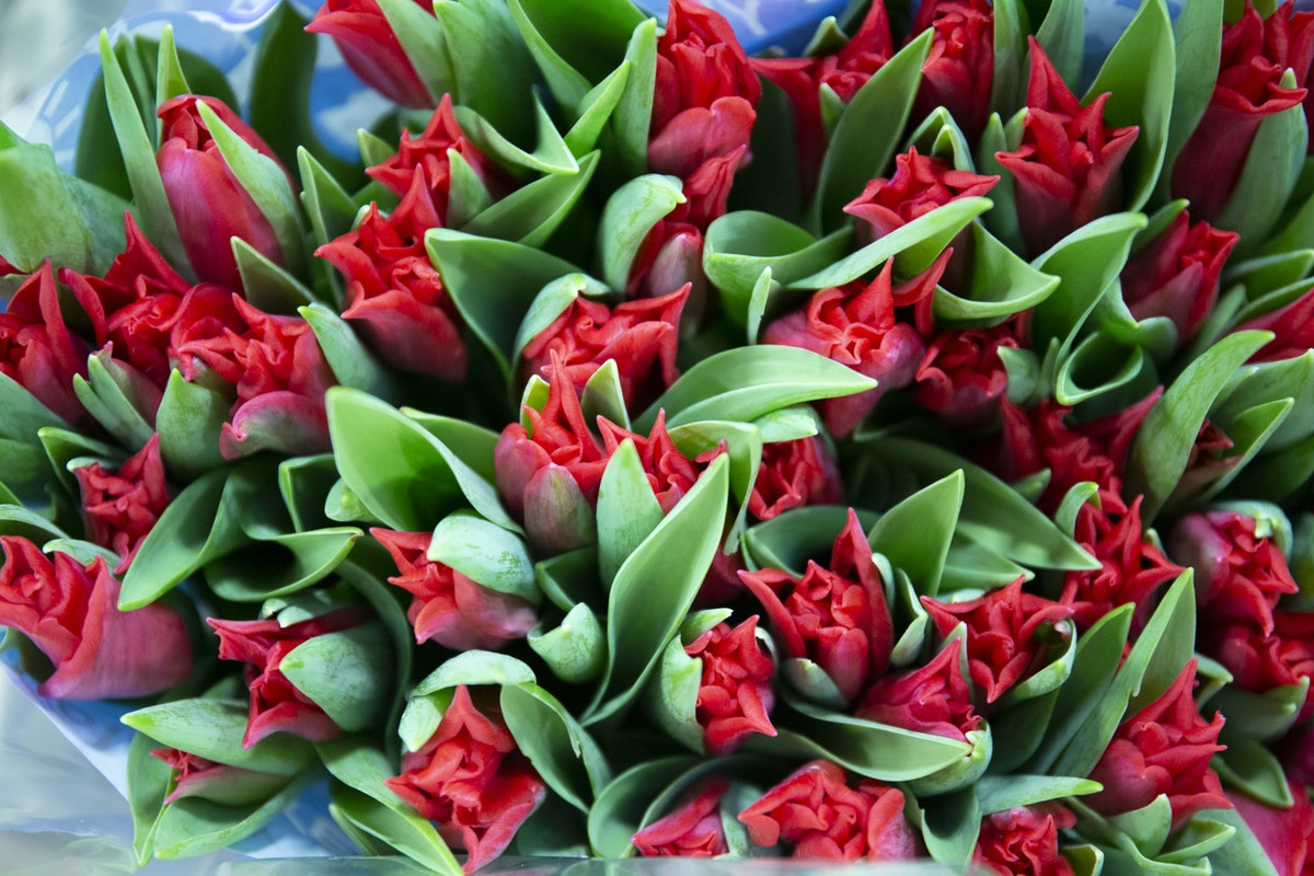 New Covent Garden Flower Market February 2020 A Florists Guide To The Language Of Flowers Rona Wheeldon Flowerona Pretty Woman Tulips At Zest Flowers