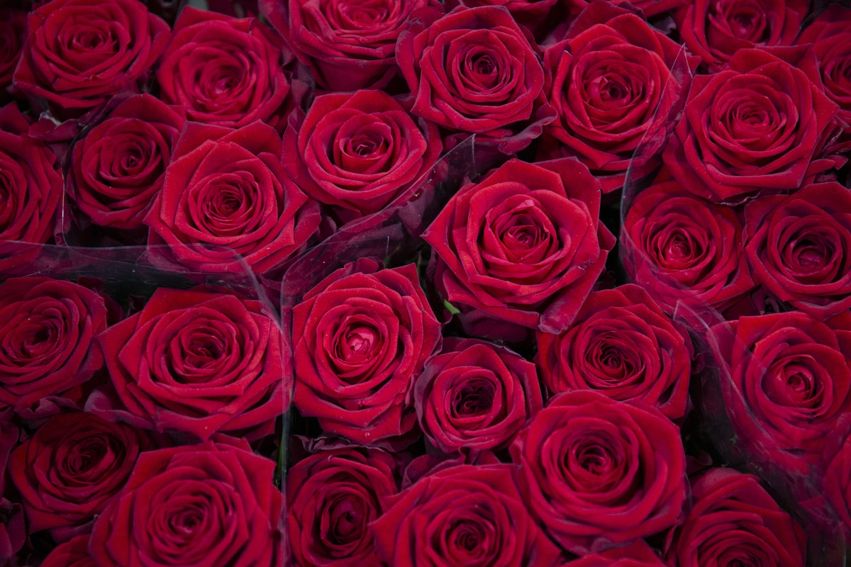 New Covent Garden Flower Market February 2020 A Florists Guide To The Language Of Flowers Rona Wheeldon Flowerona Red Naomi Roses At Zest Flowers