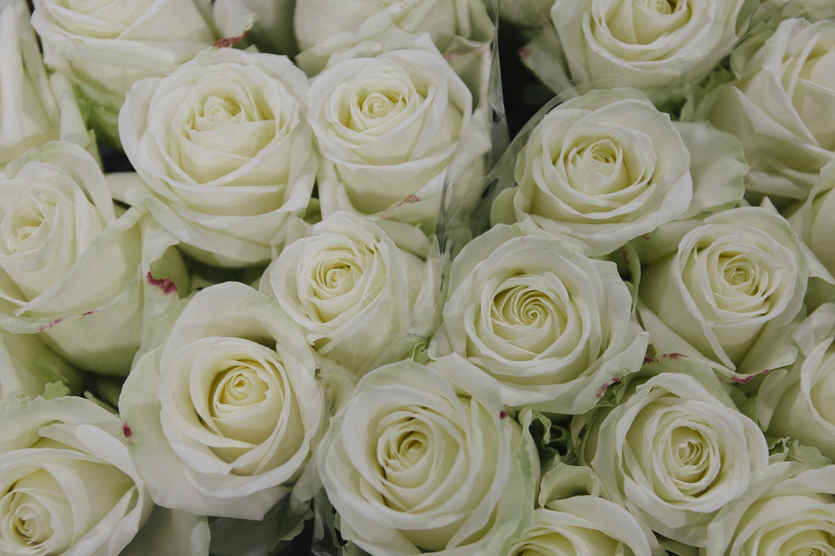 New Covent Garden Flower Market February 2020 A Florists Guide To The Language Of Flowers Rona Wheeldon Flowerona White Avalanche Roses At Bloomfield
