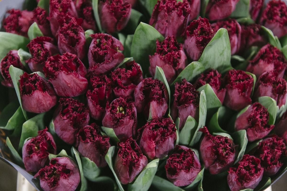 New Covent Garden Flower Market February 2020 In Season Report Rona Wheeldon Flowerona Beyonce Tulips At Bloomfield