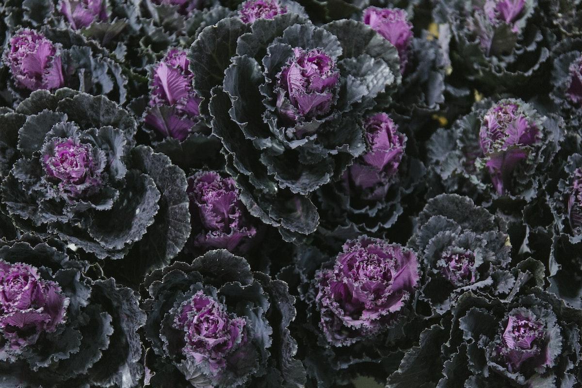 New Covent Garden Flower Market February 2020 In Season Report Rona Wheeldon Flowerona Brassica Black Leaf At Dennis Edwards Flowers