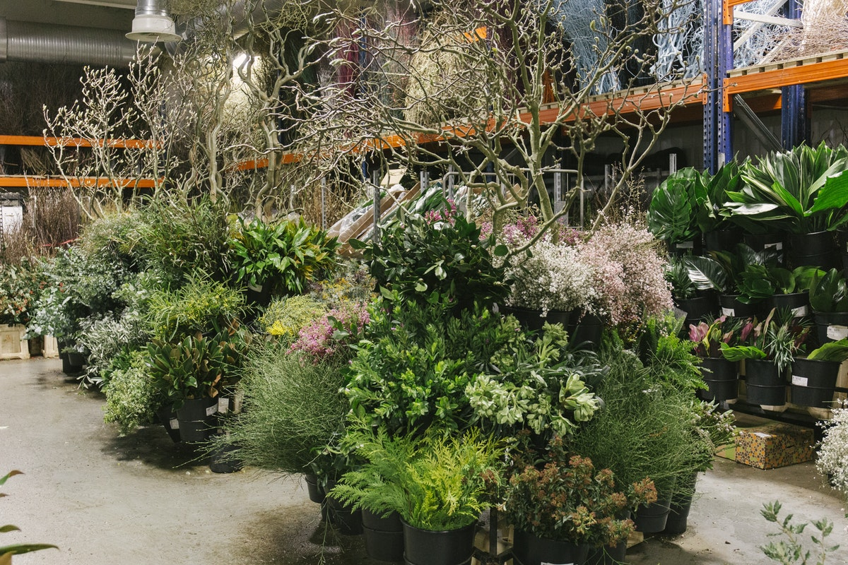 New Covent Garden Flower Market February 2020 In Season Report Rona Wheeldon Flowerona Foilage At Porters Foliage